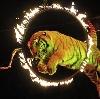Цирки в Долгом